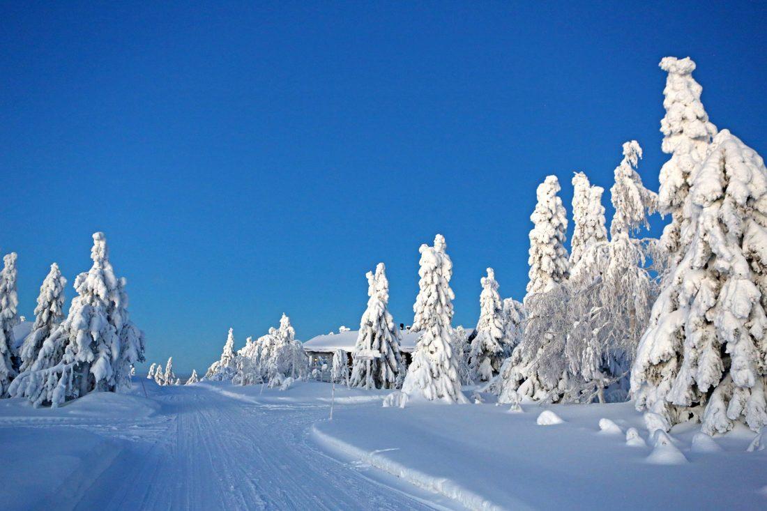 Besneeuwd-landschap-met-bomen